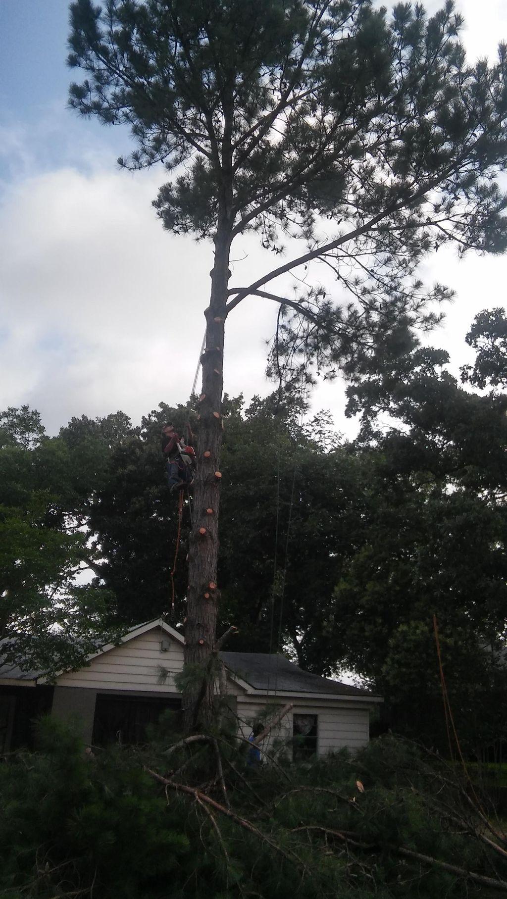 PapaLewis Tree & Lawn Service