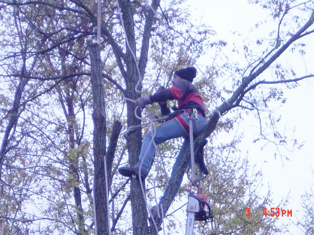 Evening & Weekend Tree Service