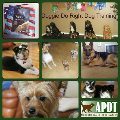 Avatar for Doggie Do Right Dog Training