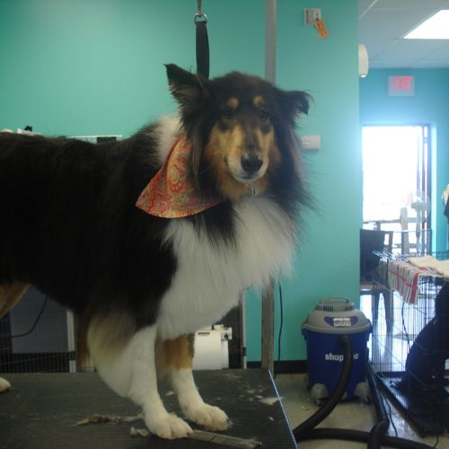 We groom all breeds of dogs and cats