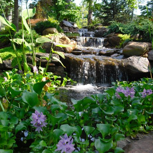 Natural or man-made? Hard to tell when it is done correctly! Let us create and install a waterfall water feature for you. Koi ponds to pond-less waterfalls - we do it all!