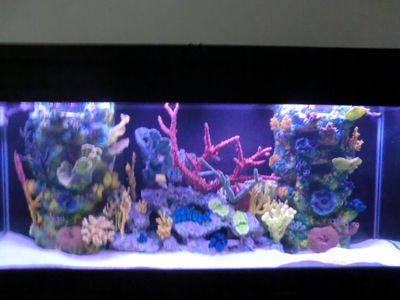Avatar for Aquarium Center, Inc.