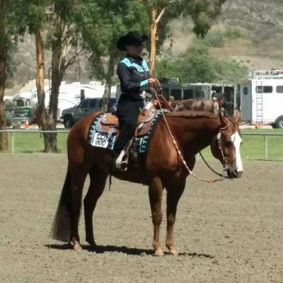 Avatar for Stacey's Star Performance Horses Cave Creek, AZ Thumbtack
