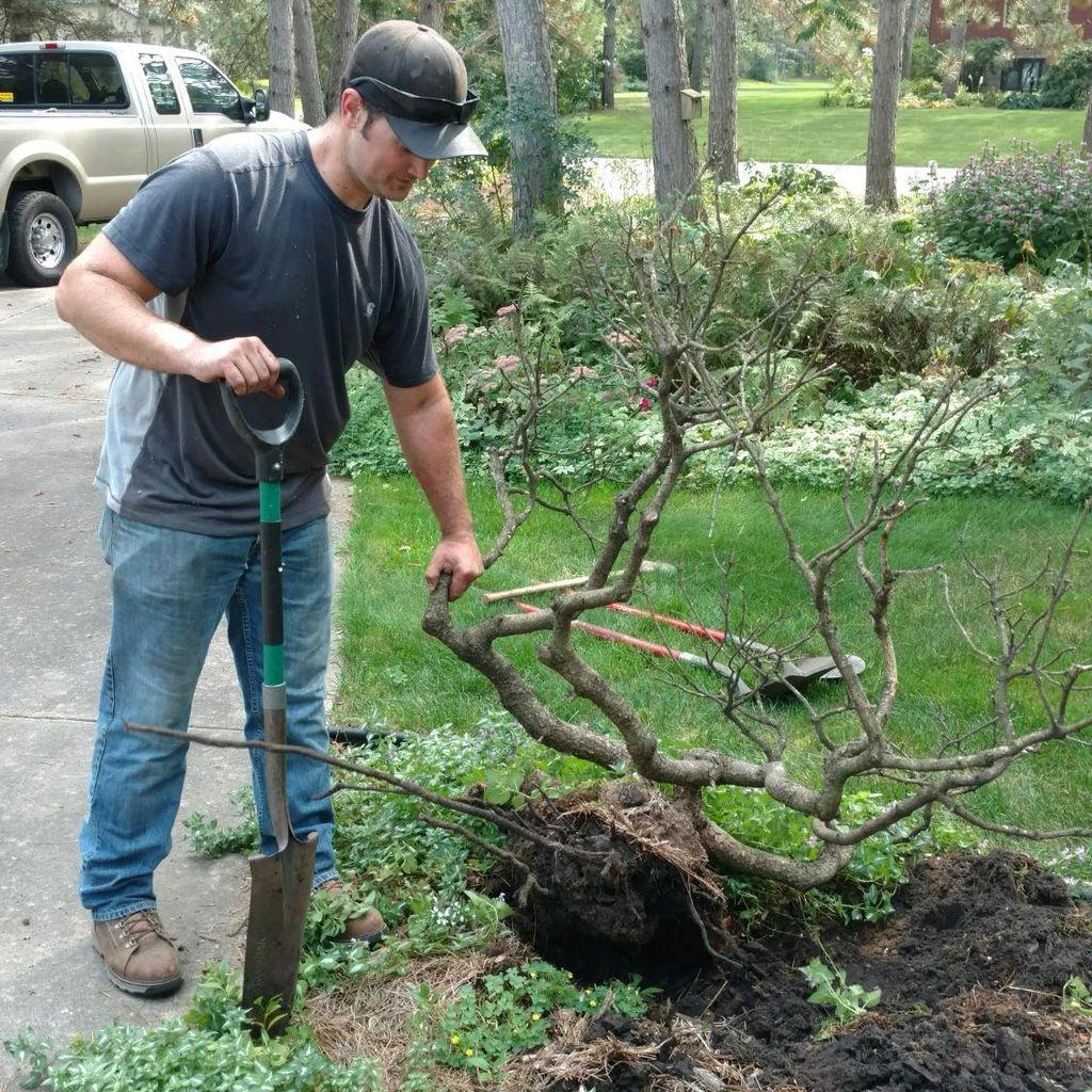 Miller Lawn & Tree