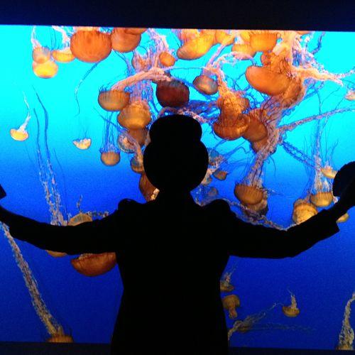 Performing at Monterey Bay Aquarium