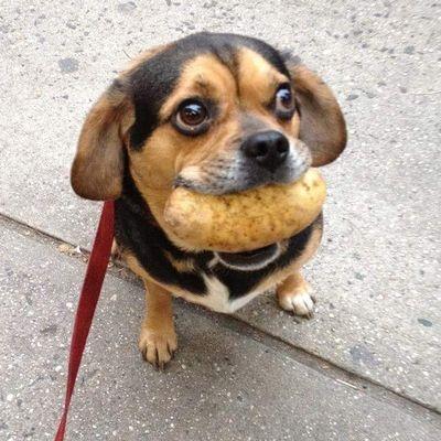 Avatar for Bark Busters Home Dog Training Denver, CO Thumbtack