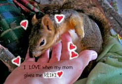 Reiki is for everyone.... including squirrels!