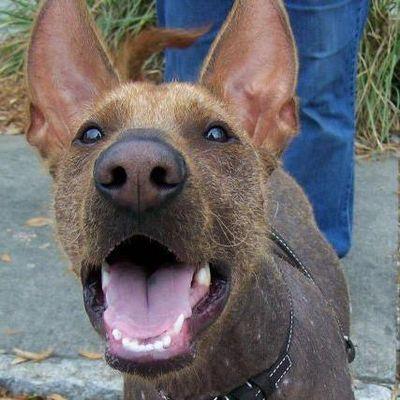 Avatar for Sit, Down, Stay Dog Training Pinellas Park, FL Thumbtack