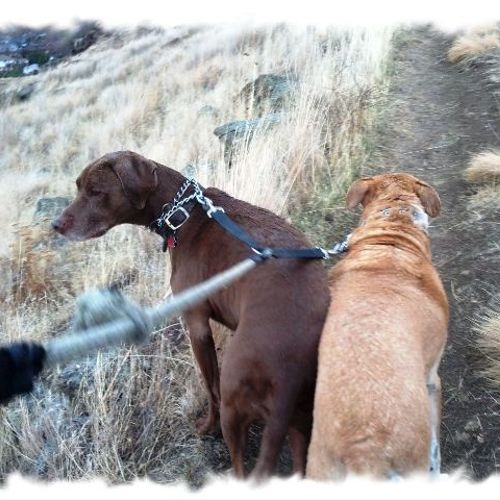 Happy dogs on a great foothills walk.