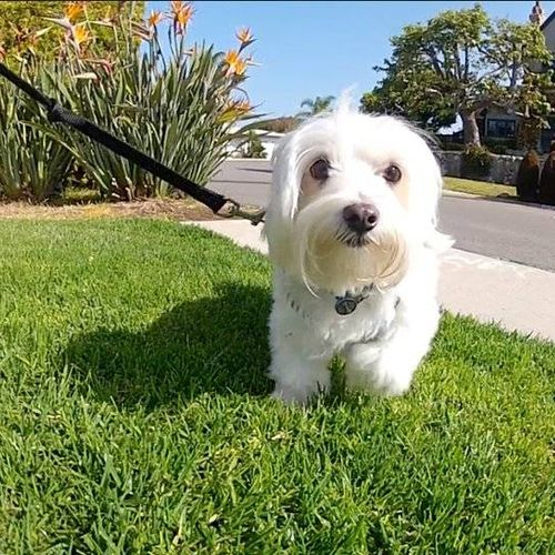This is Hugo, one of our early morning Newport Beach dog walking clients :)