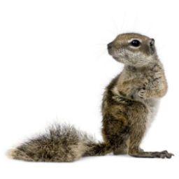 Squirrel & Bird Control