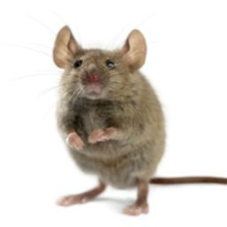 Rodent Control & Exclusion