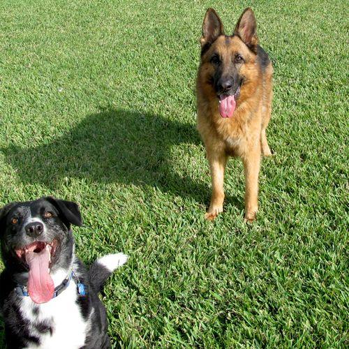 Sadie and Hugo- happy clients!