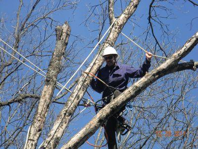 Avatar for Arbor Jacks Tree Service