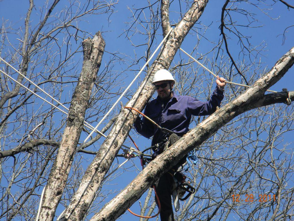 Arbor Jacks Tree Service