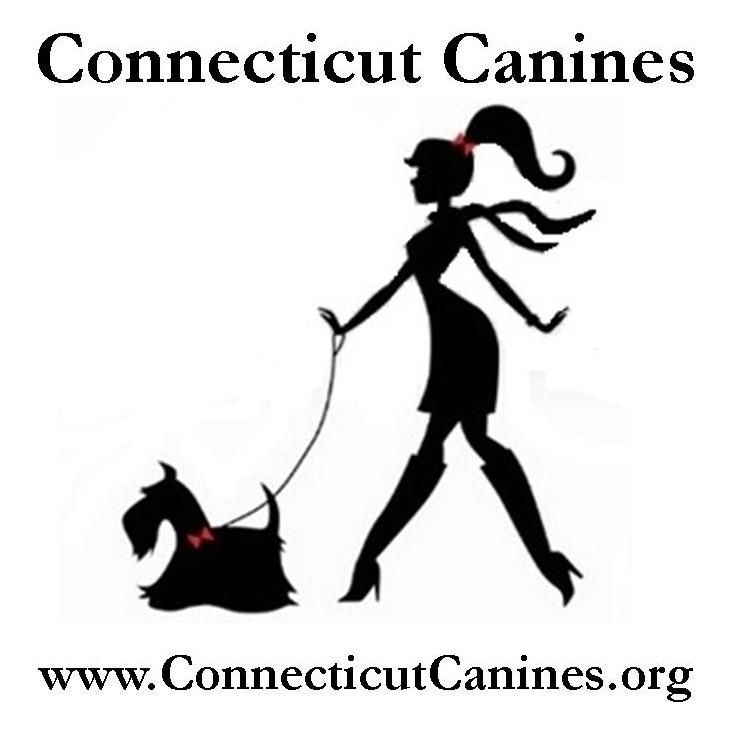 Connecticut Canines