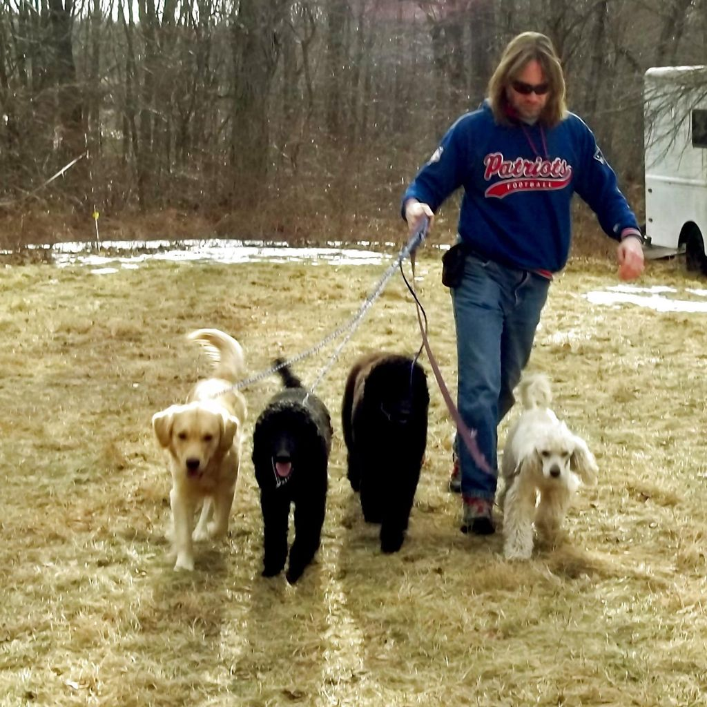 Worcester Walks Dogs