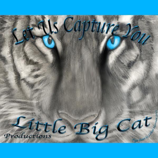 Little Big Cat Productions