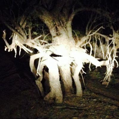 Avatar for Trimming Arizona Scottsdale, AZ Thumbtack