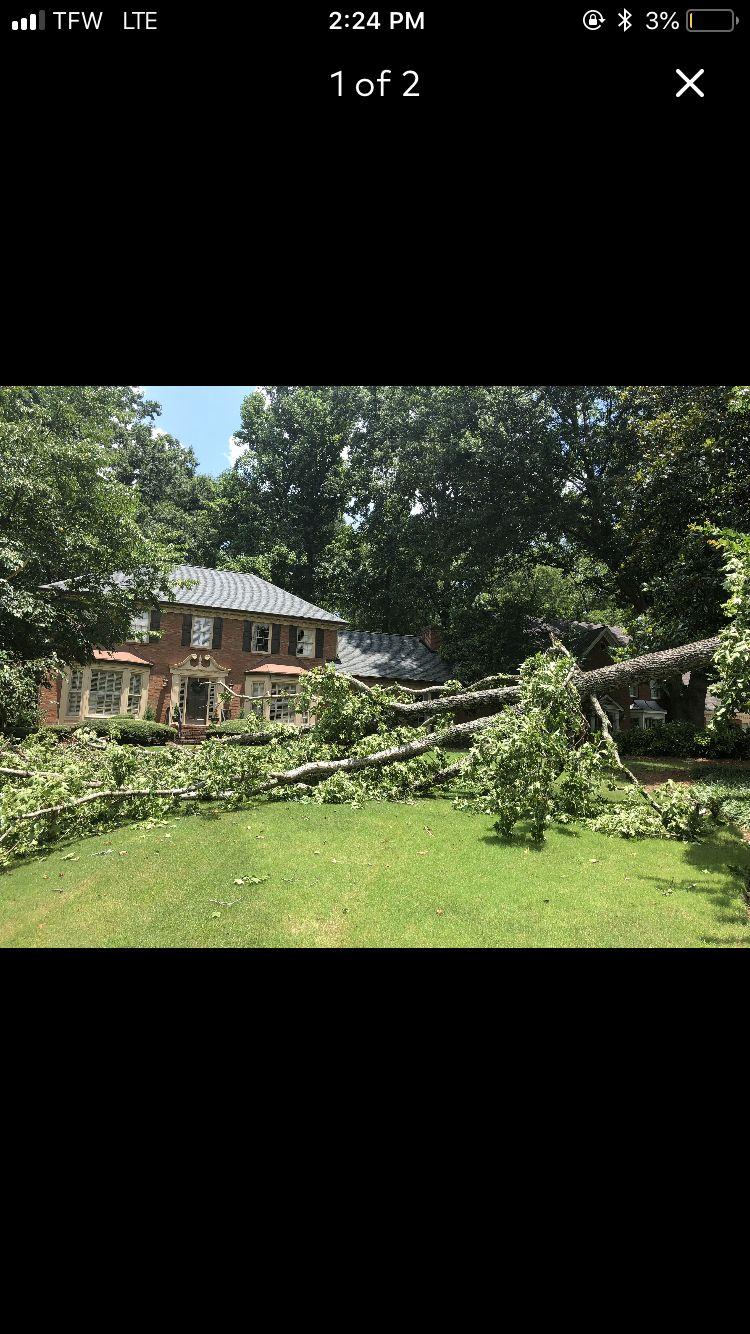 Micheal Storm Tree Removal