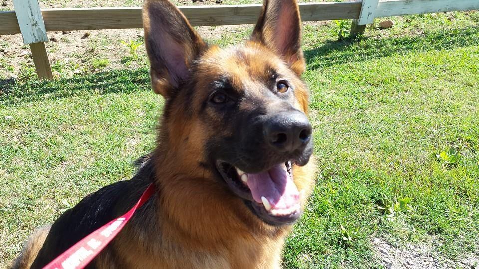 Dog Training for Reactivity