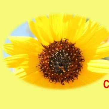 Avatar for Sunflower CPR Plus Training Co. Gardner, KS Thumbtack