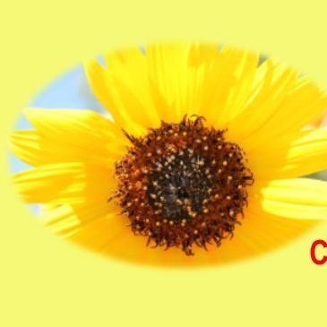 Sunflower CPR Plus Training Co.