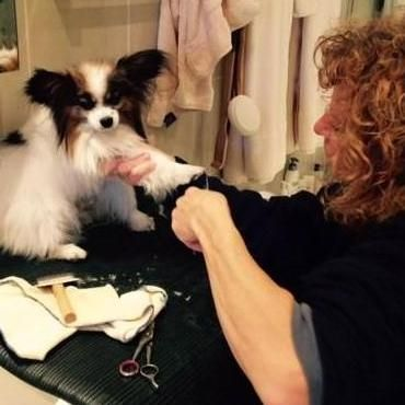 Nancy's Shaggy to Chic Mobile Dog Grooming