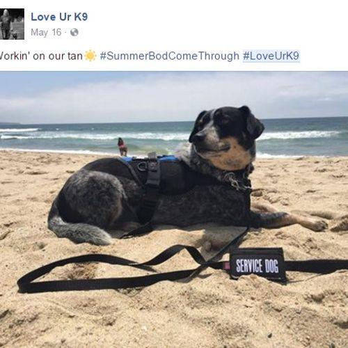 Service dog training. Love Ur K9!