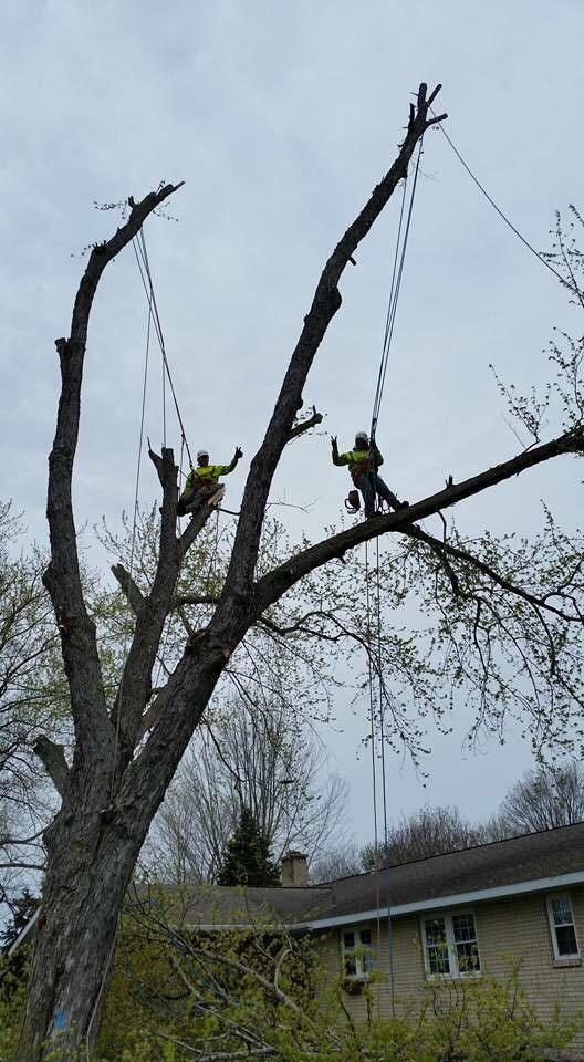Gallardo tree services