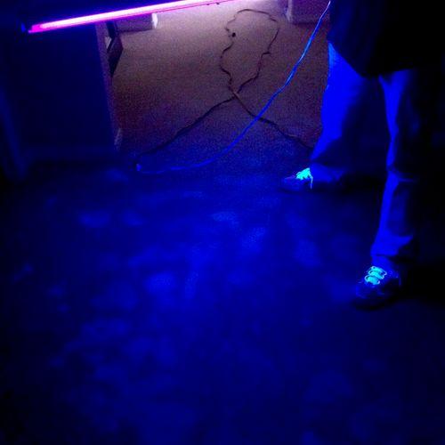 UV Black Light Inspection illuminating dog urine stains.