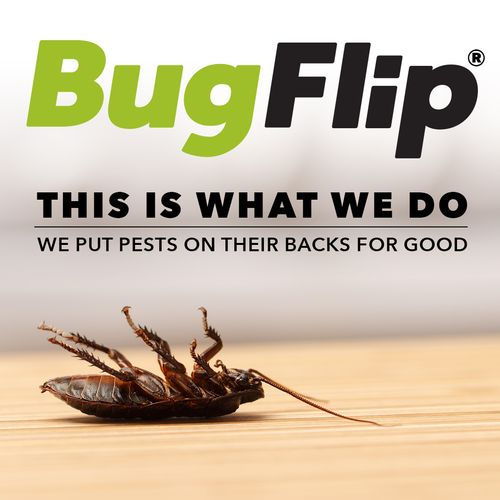 Bugs flip over our service