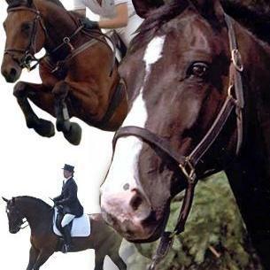 Hannaberry Farm: Straight Forward Riding