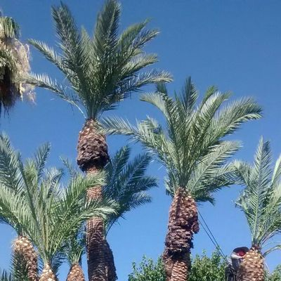 Avatar for amazing bros tree services Phoenix, AZ Thumbtack