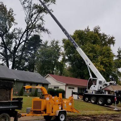 Avatar for world Tree services Memphis, TN Thumbtack
