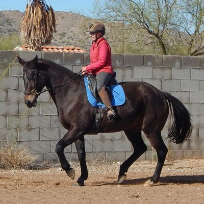 Avatar for Heart to Hoof Horsemanship Queen Creek, AZ Thumbtack