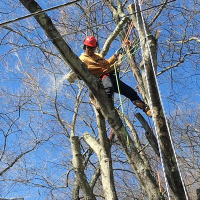 Avatar for Mauricio's Tree Service Buchanan, NY Thumbtack