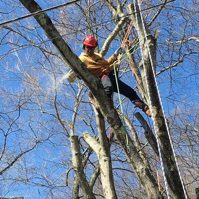 Mauricio's Tree Service Buchanan, NY Thumbtack