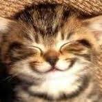 Avatar for Cat Whisperer