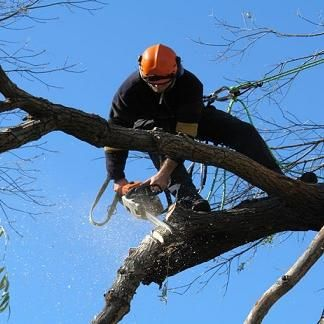 Avatar for Zamora Tree Service llc