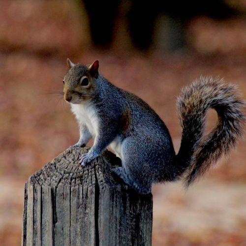 Squirrel on Post, Cooper Creek Park, Columbus, Georgia