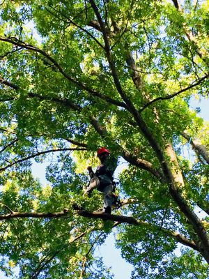 Avatar for Above the Clouds Tree Care Saint Louis, MO Thumbtack