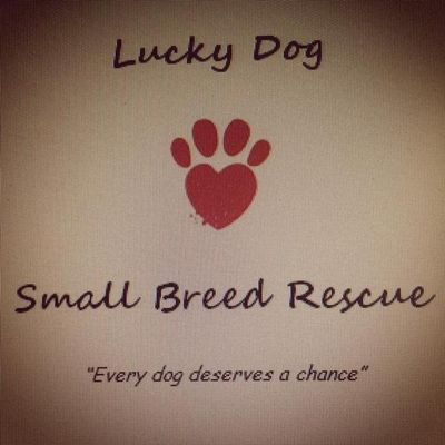 Avatar for Lucky Dog Special Care Dog Sitting Fond Du Lac, WI Thumbtack