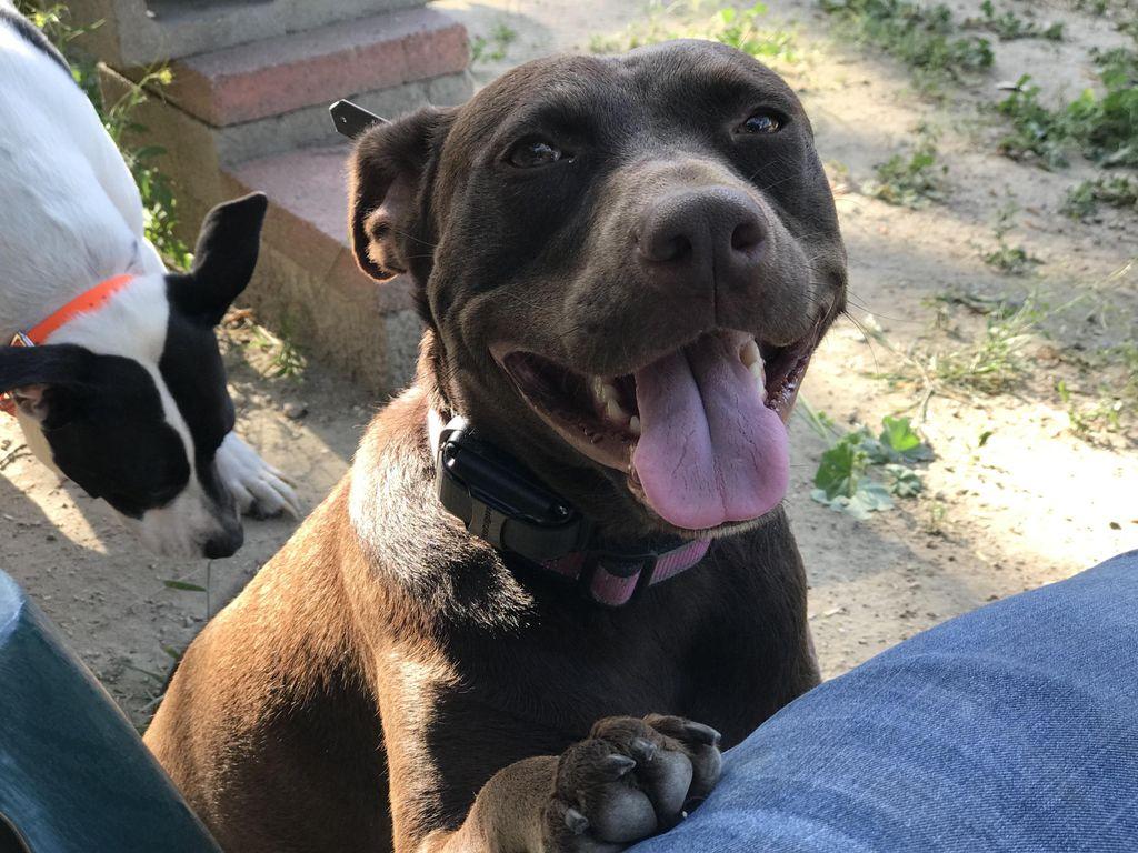 L.A. Dog Behaviorist