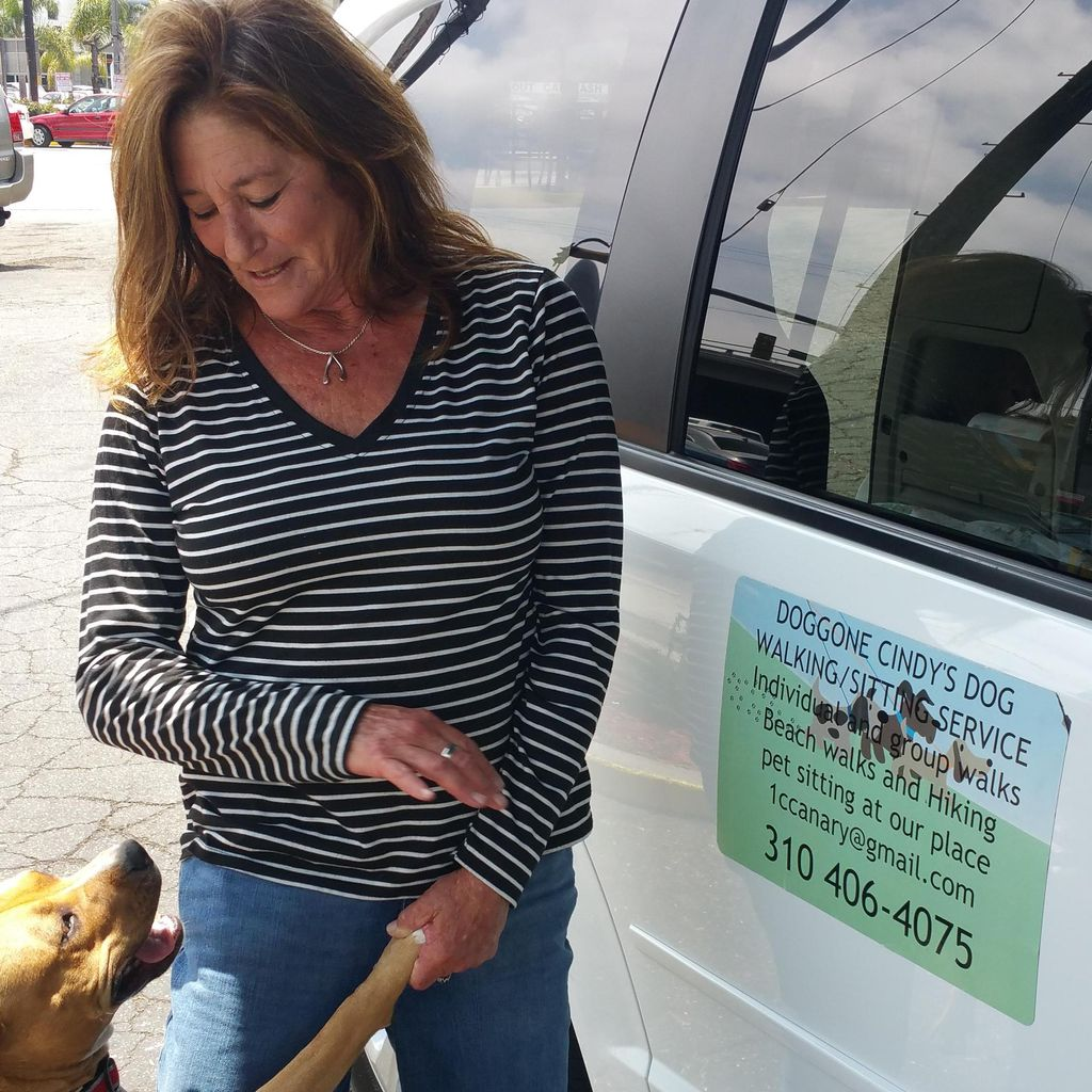 Doggone Cindy's, LLC
