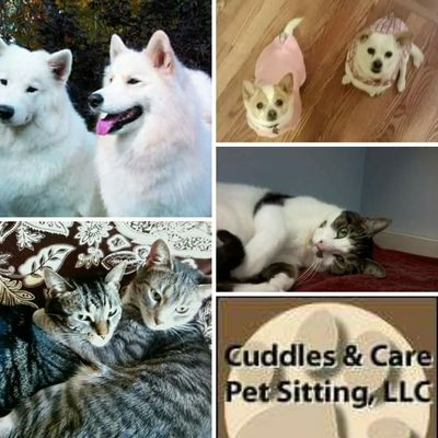 Avatar for Cuddles & Care Pet Sitting Service, LLC Elyria, OH Thumbtack