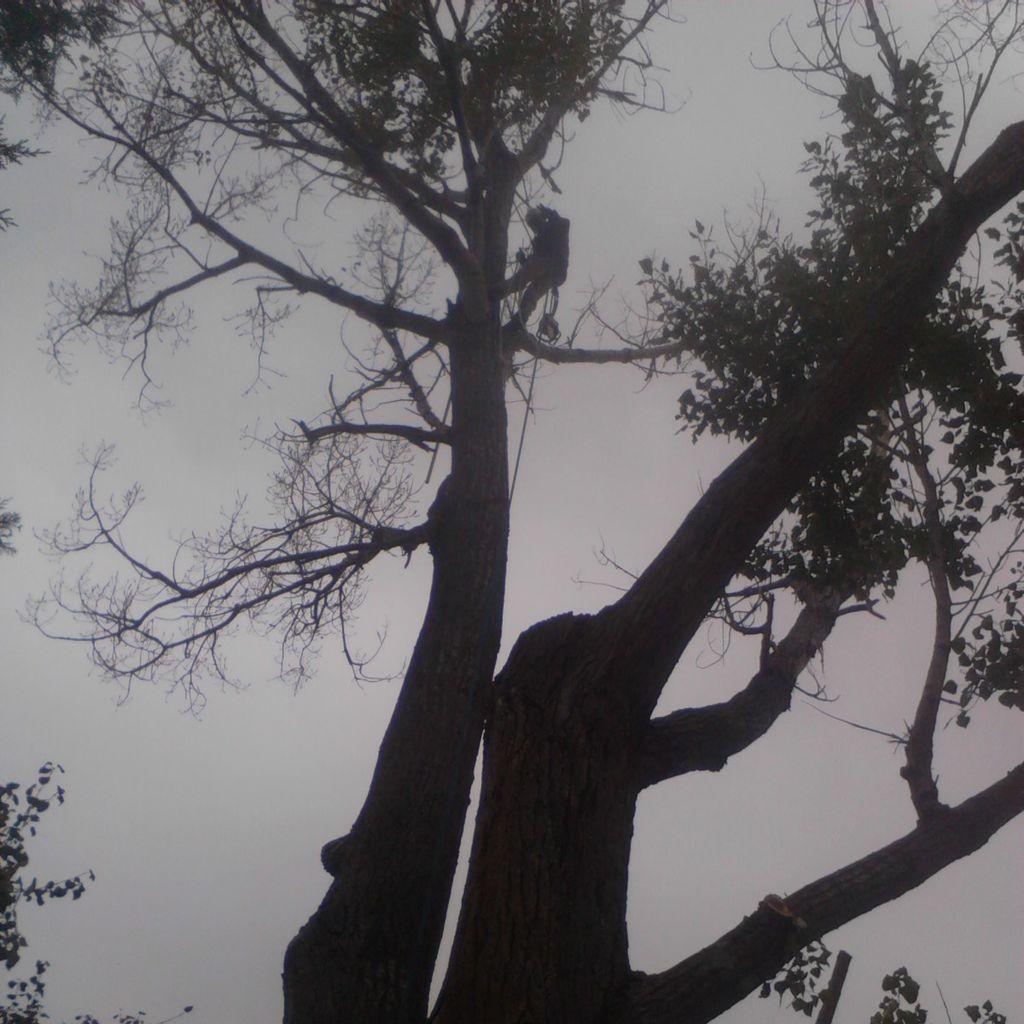 Brennan tree and yard Inc