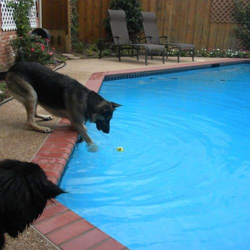 Swimming lessons available!