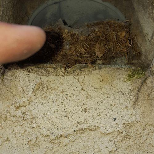 Bird nest in dryer vent blocking air flow