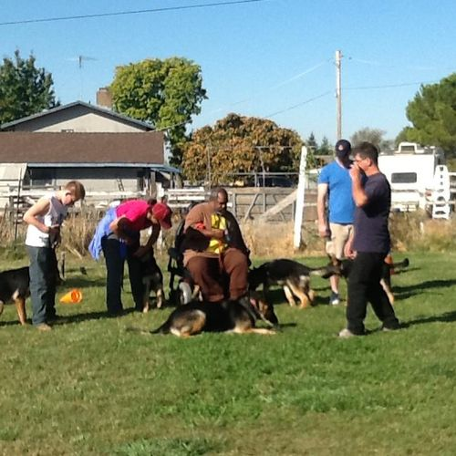 Group classes can really help your dog get use to things they may not see to often